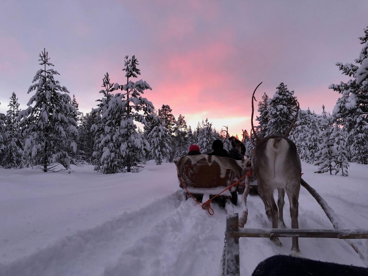 [2018芬蘭追極光之旅] 在Inari追北極光的四個夜晚(三)︱夜半在極地森林探險、哈士奇和馴鹿雪橇體驗